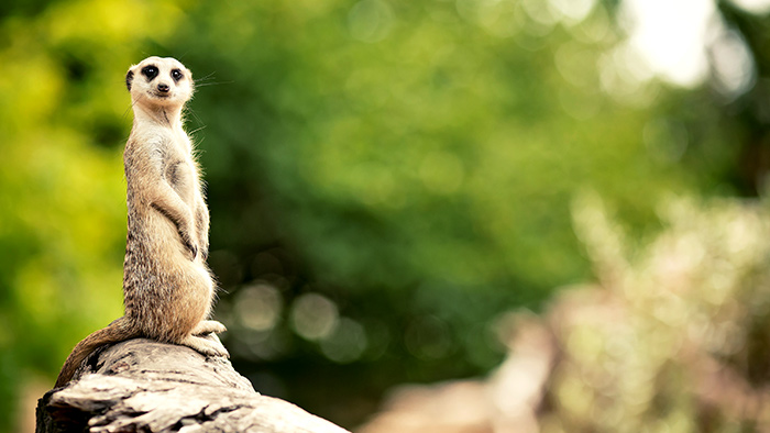 Meerkats & Moles: How to Become an Expert Coach